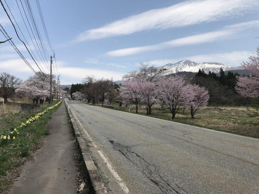 水沢温泉郷のお花たち