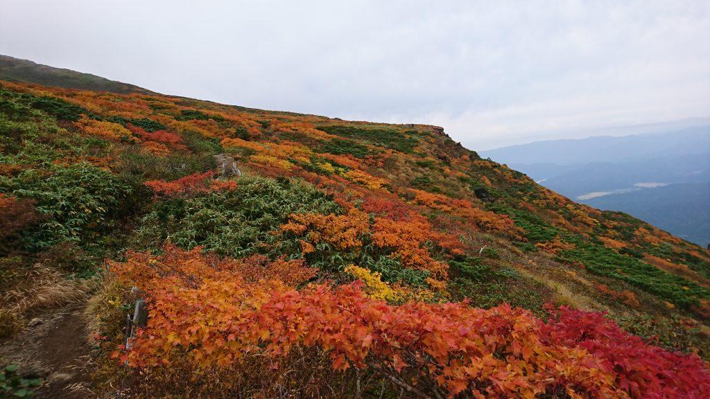 秋田駒ヶ岳の紅葉 2020