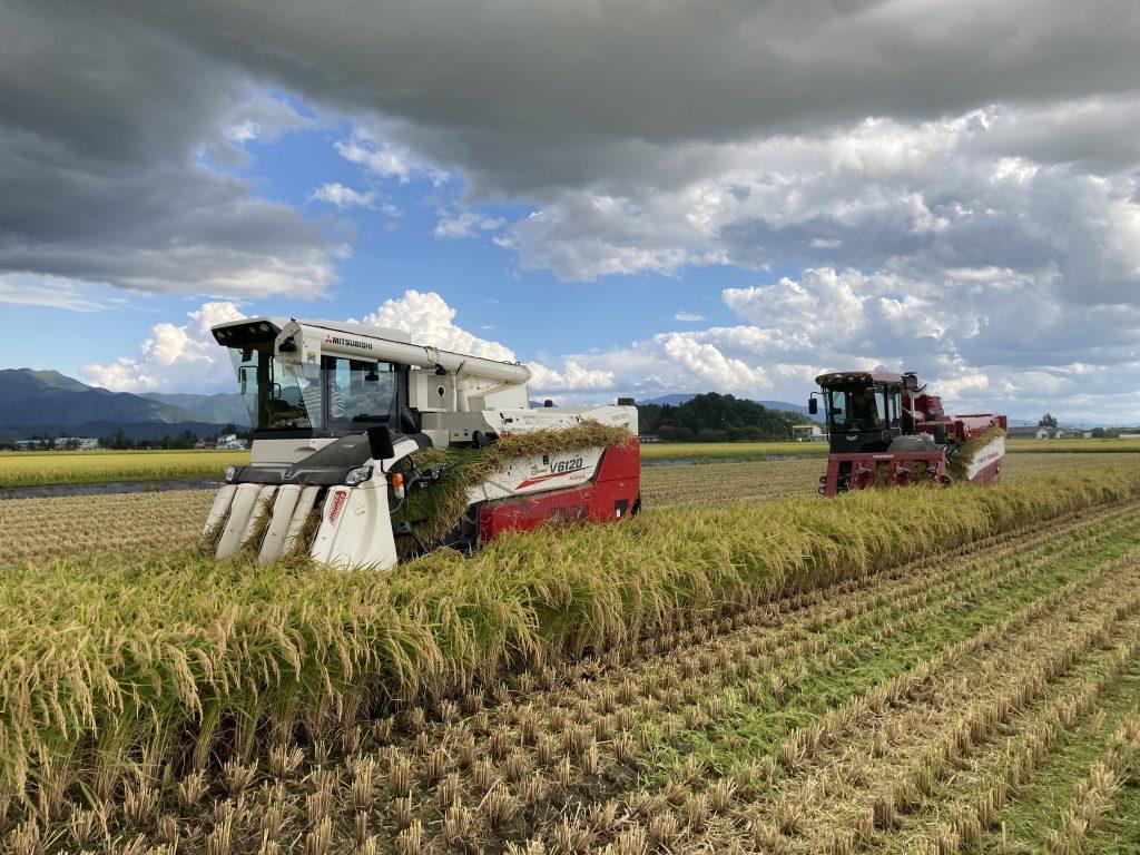 稲刈り 2021