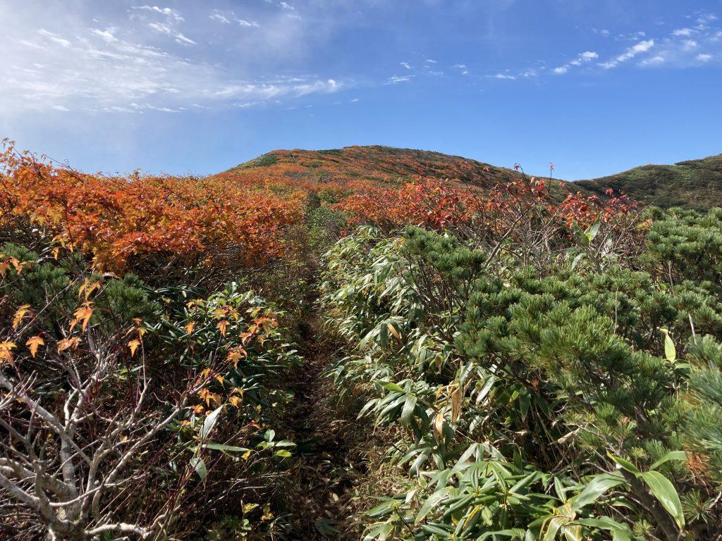 秋田駒ヶ岳の紅葉 2021